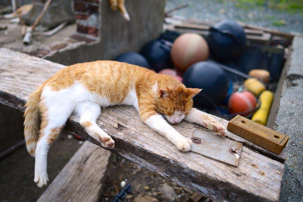 Rudy kot śpiący na deskach.